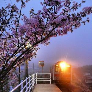 素敵な花咲線東根室駅の夜桜とルパン三世ラッピングトレイン♪
