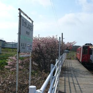 最東端駅の桜と地球探索鉄道花咲線ラッピングトレイン♪