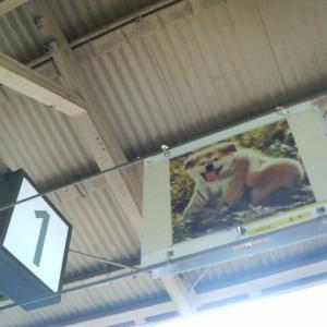 18きっぷ途中下車旅行記(19)・秋田犬とハチ公の駅・JR奥羽本線・大館駅(15分・2013/07)