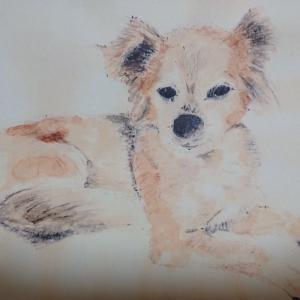 友人の愛犬タローのスケッチ