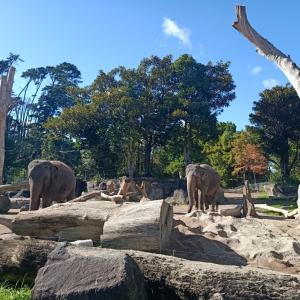 ニュージーから象がいなくなる。