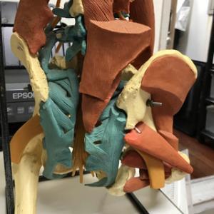 腰椎椎間板ヘルニアは創術の仲村整骨院にご相談下さい!