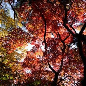 有馬瑞宝寺公園の紅葉 2