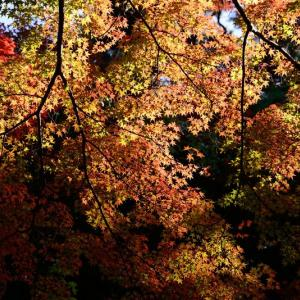 有馬瑞宝寺公園の紅葉 3
