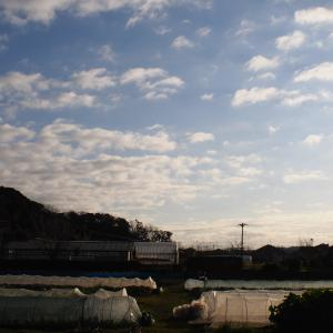 【今日の写真】桜とか【2020/1/7】
