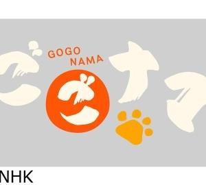 【悲報】NHKで放送事故! ※GIFあり