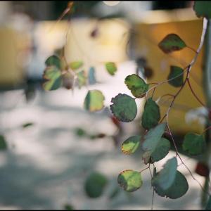 scene1535:Leica S typ007