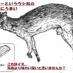 めくるめく知のフロンティア・学究達 =090= / 亀井伸孝(07/mn)