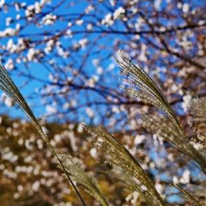 立冬の庄内緑地 ①