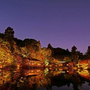 令和元年の東山公園ライトアップ