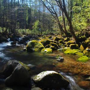 新緑が出始めた渓へフライ釣行 ⑦