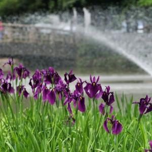 名城公園の日常風景