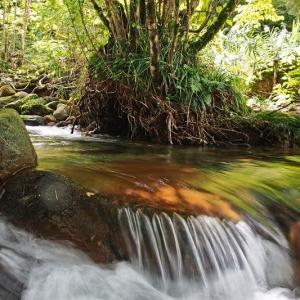 渓流フライフィッシングの風景 ⑬