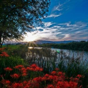 秋の川辺に咲く彼岸花