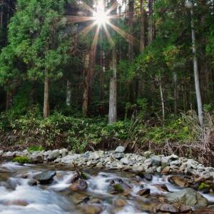 渓流フライフィッシングの風景⑭ Final