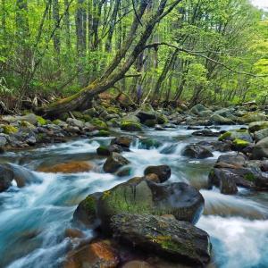 渓流フライフィッシングの風景 ⑤