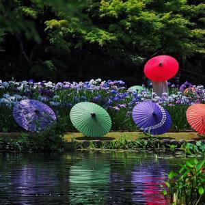 和傘 ✖ 花菖蒲 ②