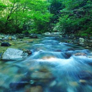 渓流フライフィッシングの風景⑩