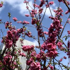 春だから、、、①