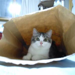 お気に入りの袋、、、にゃ