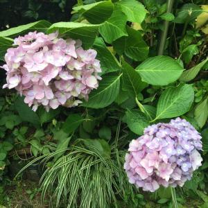 実家の花たち2