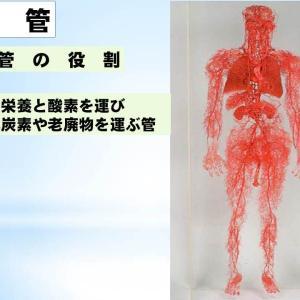 血管の知識