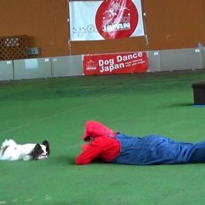 DDJP Training Day &  Fun Show
