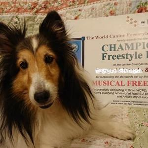 CHAMPION Freestyle Dog
