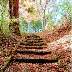 そろそろ紅葉も終わりかな・・丹波篠山市王地山公園