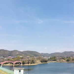 【春日池公園へ】写真多め・桜の開花状況(3/24時点) 自然に触れるの巻