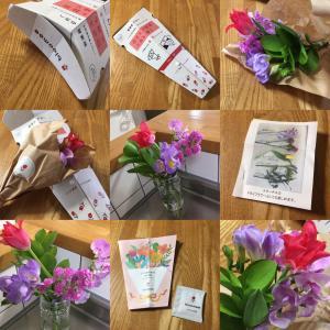 【bloomee】お花が届いたよ!お花のサブスクに挑戦!カンタン・ラクに風水も取り入れよう