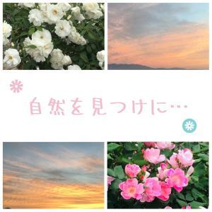 【スマホ内の写真】バラの花、海、夕焼けの写真〜写真を撮る時は○○がある時〜