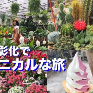 台湾の花卉園芸の中心地!彰化・田尾でボタニカルな旅!