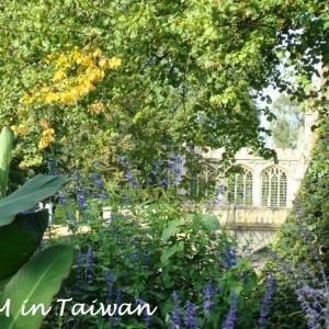 ケンブリッジのケントの花