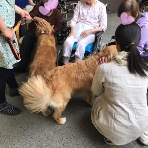 保護犬猫による訪問アニマルセラピー