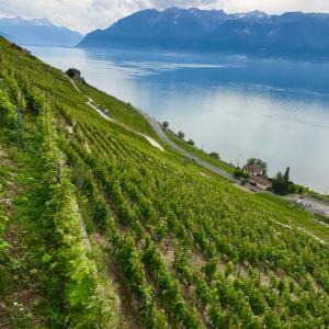LAVAUX 1000年前にイタリアより伝わったワイン造り スイス世界遺産 ラヴォー地区