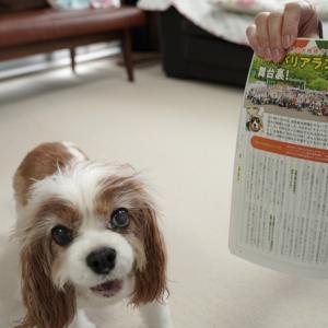 雑誌Wan9月号、あいちゃんを探せ!