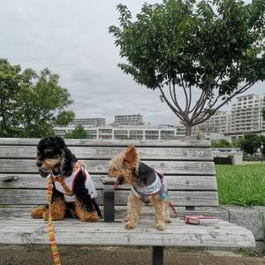 私とリカのお散歩中に、旅立ってしまいました。。。