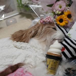 あいちゃん、最後のアイスクリームだよ♪