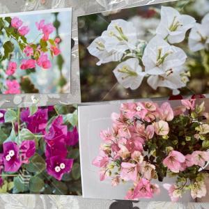 ロウの花レッスン「ブーゲンビリア」