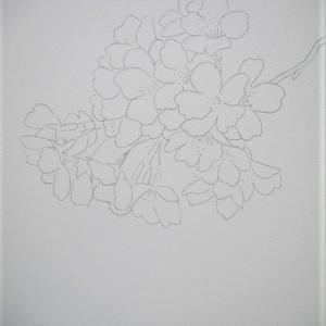啓子おばさんの水彩レッスンⅣ桜の描き方