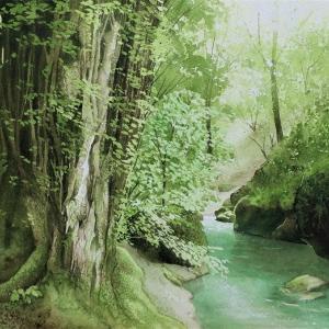 安谷川の カツラの木の過程