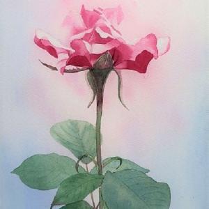 9月の教室課題  薔薇を描く