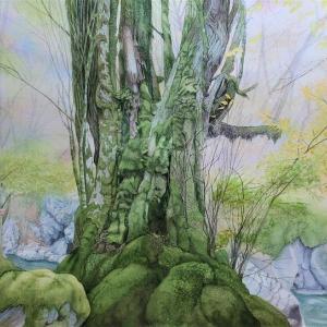 奥多摩散策とガニ沢のカツラの木の過程