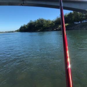 神通川は、微妙。