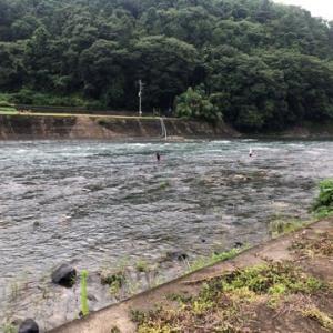 桂川で、やっと本来の鮎釣りが出来た。