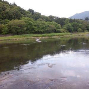 泳がせ釣りに軍配が上がる山梨桂川