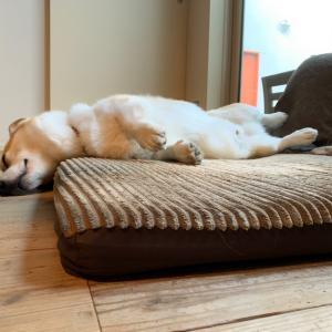 無防備な寝方