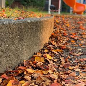 秋の夕日に照らされて