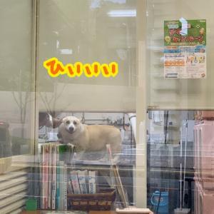 トリミング台で引きつる犬
